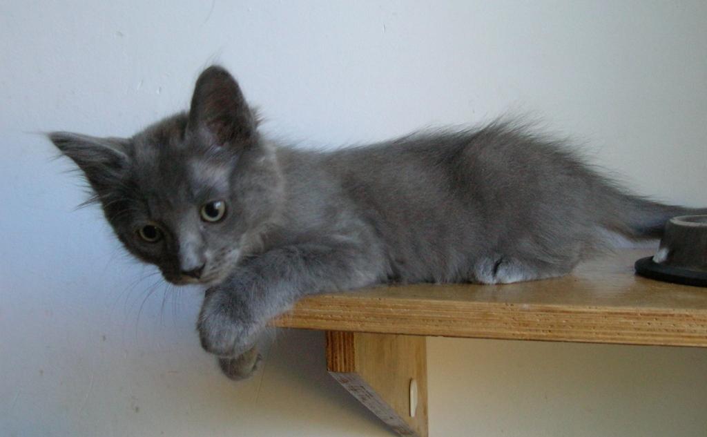 Hamond The Grey for sale Hamond011