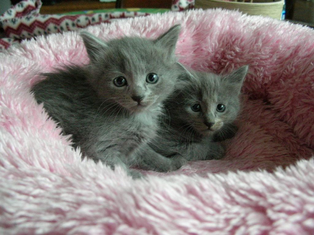 Kittens - the Grey !!! - Page 2 KittensI005