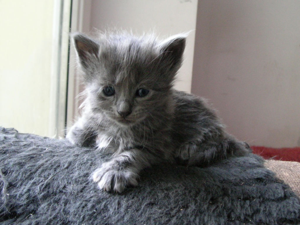 Kittens - the Grey !!! - Page 2 KittensJ0001
